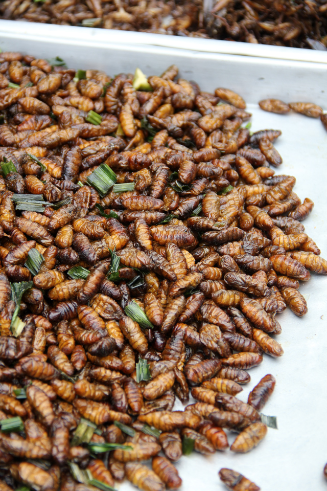 8263579710 87e10ea7c1 o How to Eat Scary Insects, Worms, and Bugs in Thailand