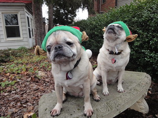 In which the pugs represent the traditional holiday emotions of misery and fury, 1