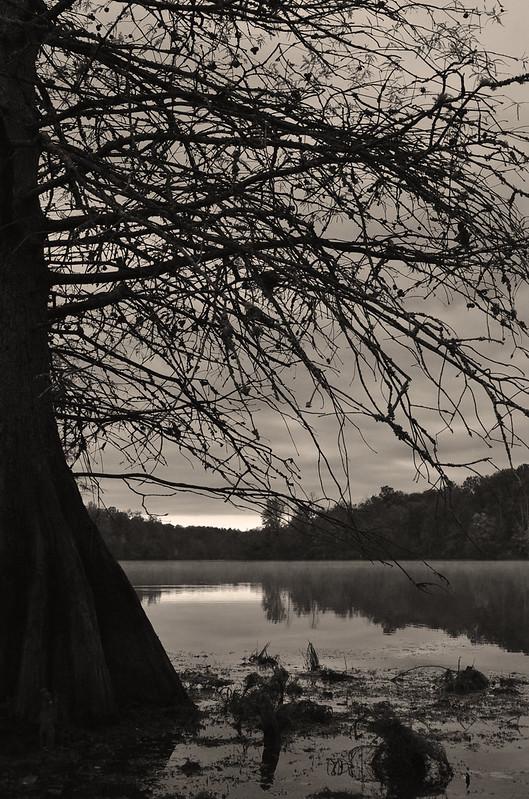 Cypress  (4)