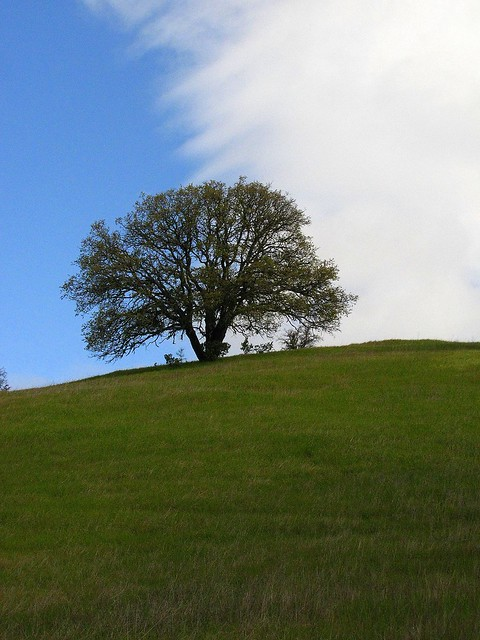 Oak Tree and Yin Yang Sky