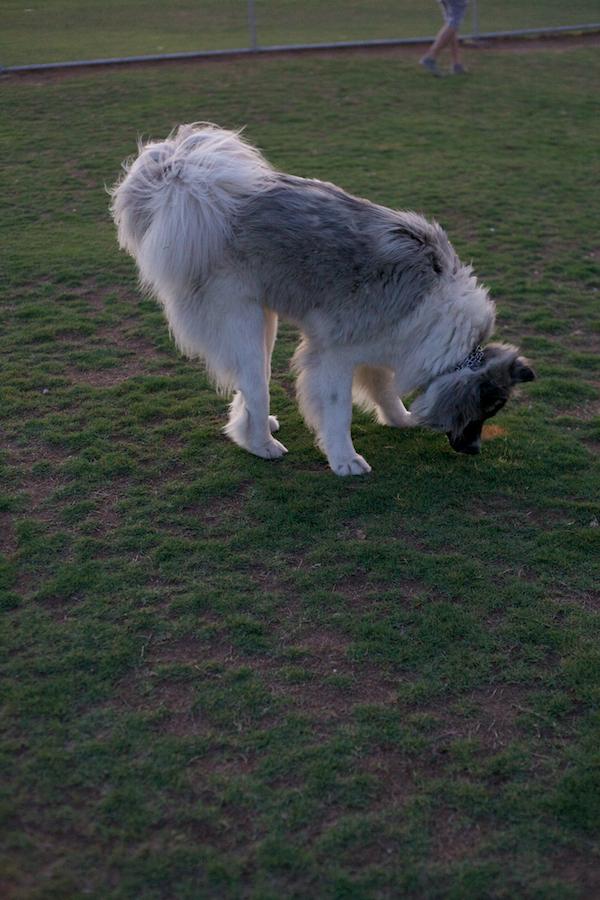 jaxharmon_dogpark_15