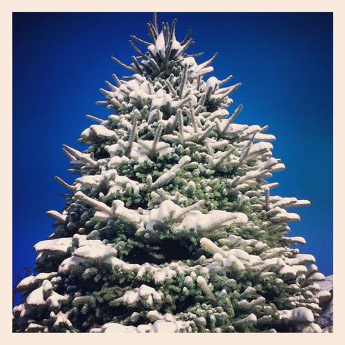 Snowy by Nancy Hawkins