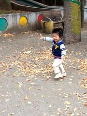 鳩を追いかけて走る - 朝散歩 (2012/11/11)