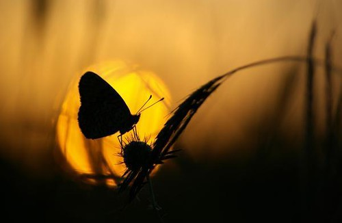 sunset-butterfly