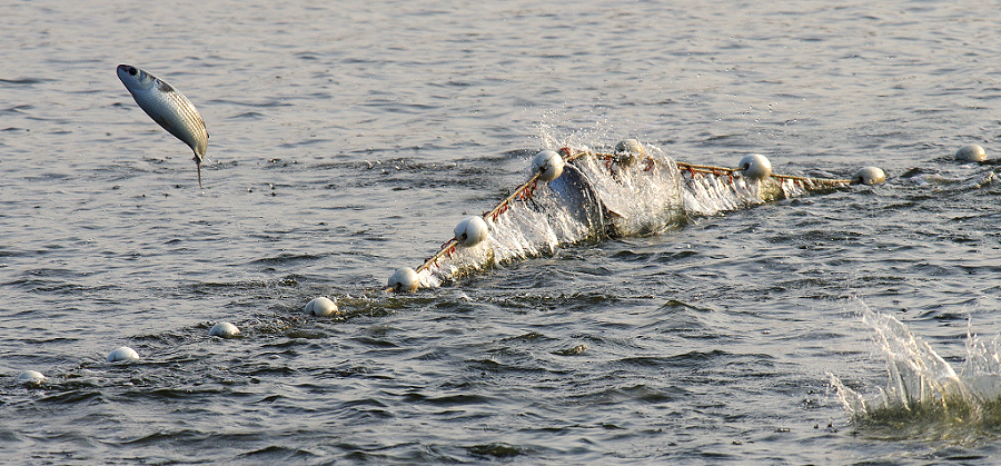 撒網下水把魚打,捕條大魚笑哈哈