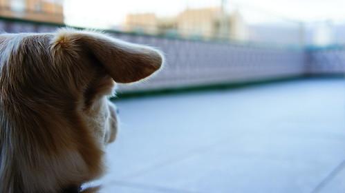 Filosofo canino