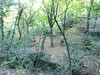 il bosco scosceso