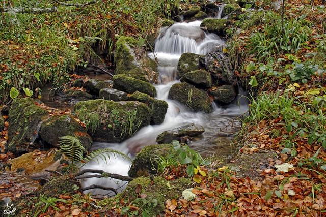 El rio en otoño