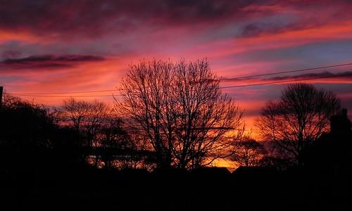 trees sky silhouette sunrise leeds stanningley