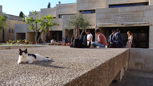 히브리대학교 2012-11-15 15-11-20 - DSC09684