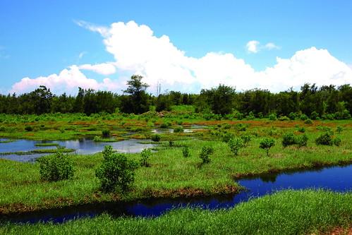 鰲鼓平地森林園區-濕地與森林保育(林務局提供)