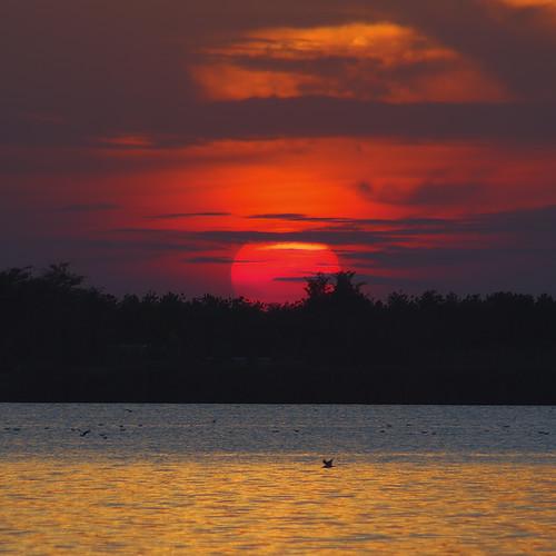 sunset red sun lake nature nikon europe serbia subotica palic srbija