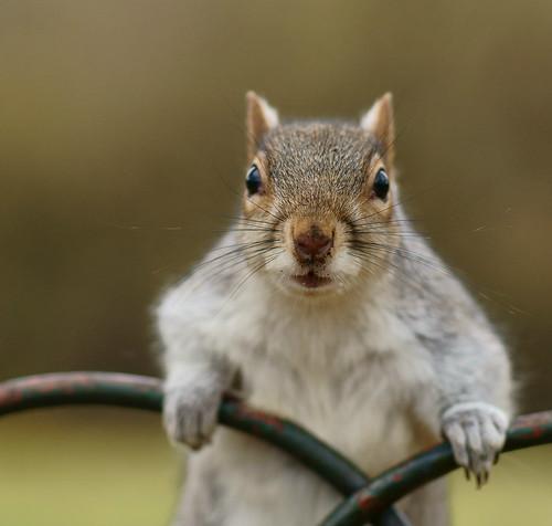 [フリー画像素材] 動物 (哺乳類), 栗鼠・リス ID:201211281000