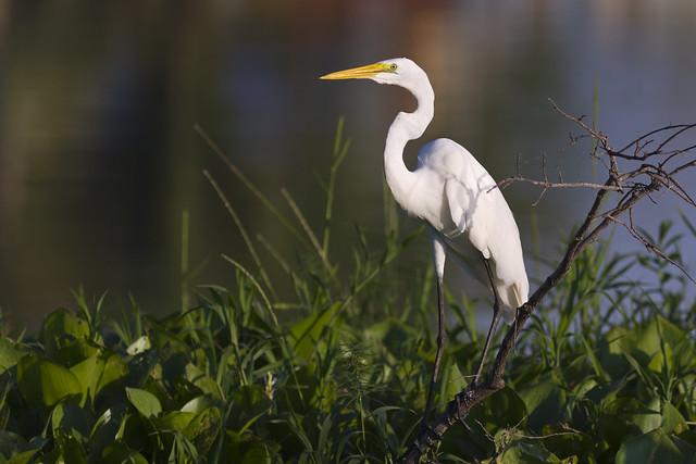 Nová ptačí pozorovatelna u Šumperka