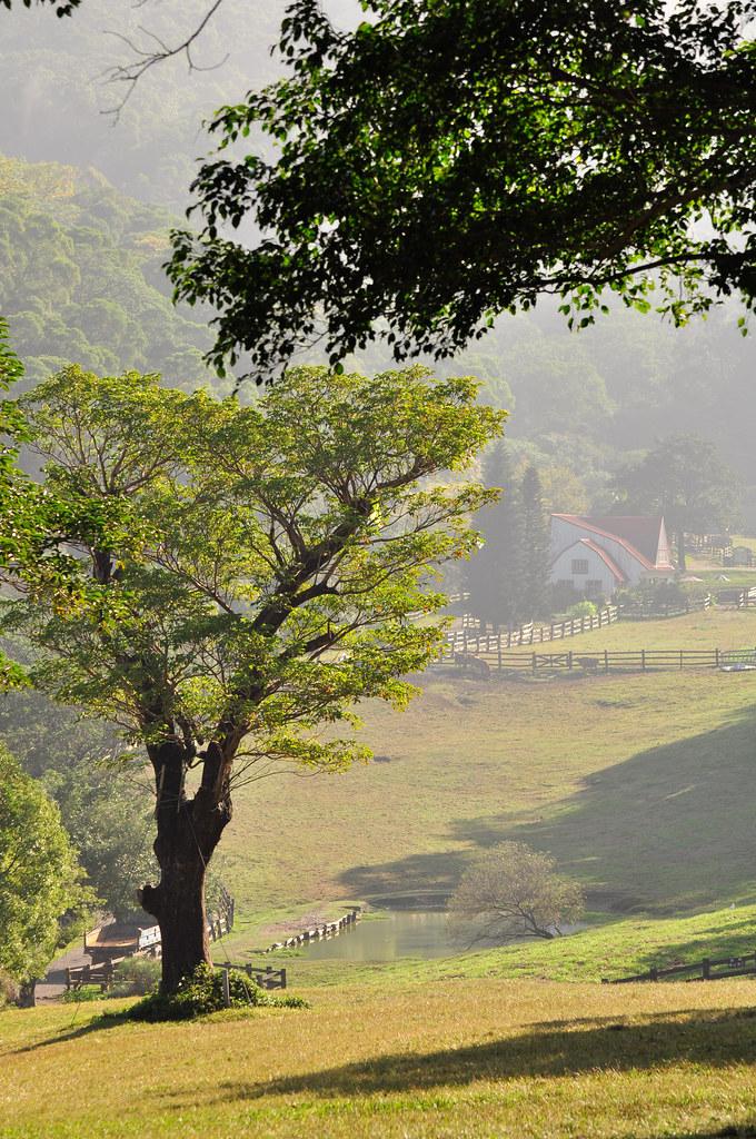 Miaoli Flying Cow Ranch 飞钮牧场