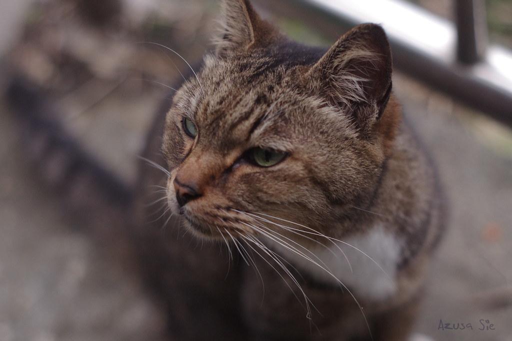 平溪一日遊之猴硐貓。內有貓咪,不喜勿入!