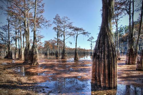 nature creek river georgia landscape swamp spanishmoss blackwater riverbank hdr oldbuilding cypresstrees wetland georgelsmithstatepark cypressknees