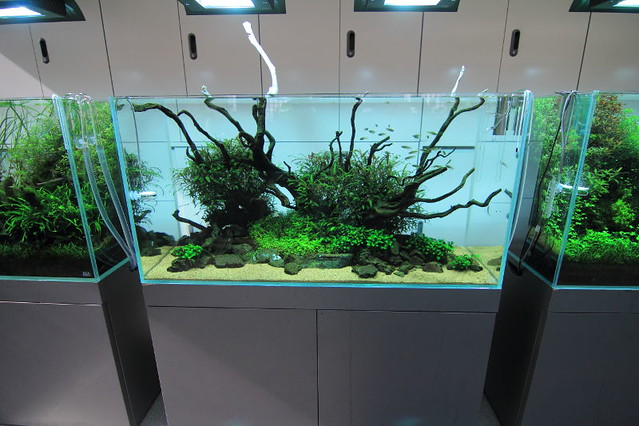 Aquascaping Is A Marriage Between Art And Farming My Blog:  Http://aquatic Art.blogspot.com/
