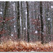 First snowflakes by aviana2