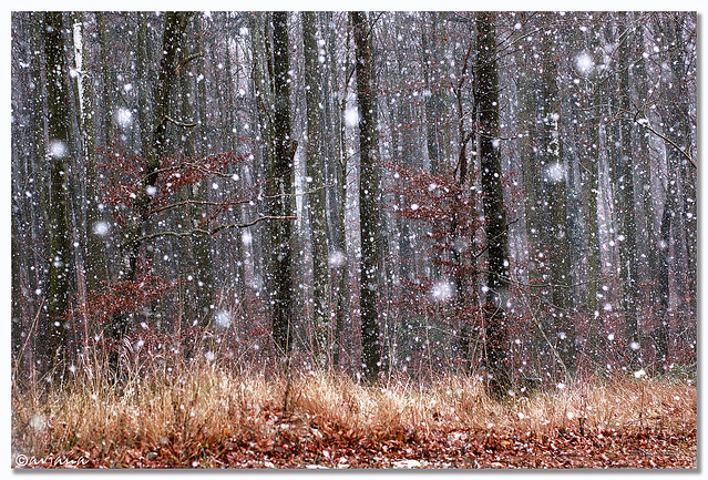 First snowflakes