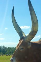 Lion Country Safari '12