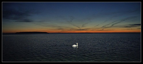 sunset sea sun nature water silhouette dark denmark swan nikon nocturnal darkness dusk swans danmark supershot nikond5000 rememberthatmomentlevel1