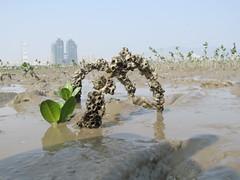 鱷魚島濕地生態。照片提供:林大聲