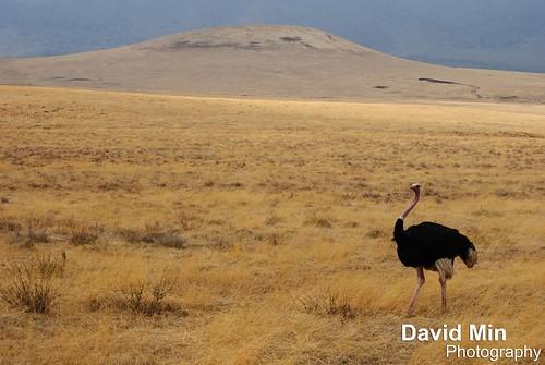 Ngorongoro Crater, Tanzania by GlobeTrotter 2000