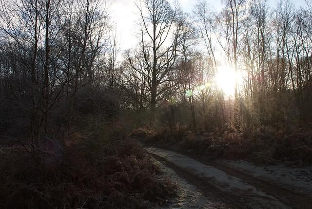 DSC_5348 Frosty woodland