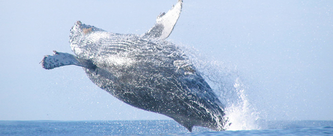 32 LIST Whale Watching