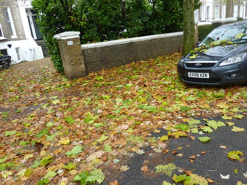 Leaves on my street width=
