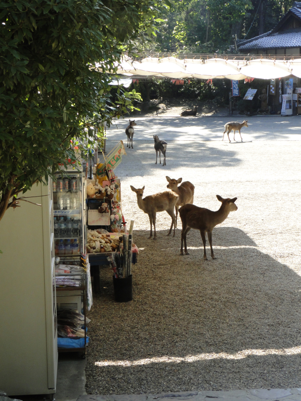 Fabric Paper Glue in Japan - Deer at Nara