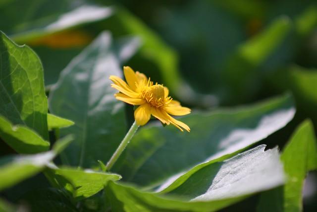 康樂花園的花Canon EOS 30DCarl Zeiss Vario-Sonnar 80-200mm f4 HFT