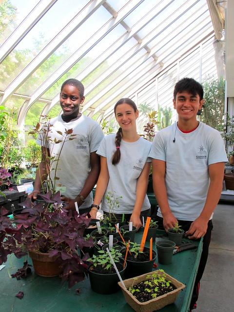Transplanting seedlings. Photo by GAP.