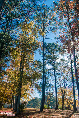 autumn trees lake fall nature water georgia landscape fallcolors westpoint troupcounty westpointlake thesussman sonyalphadslra550 sussmanimaging