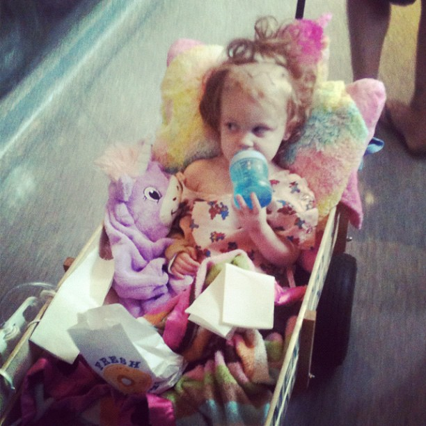 #reesey #prayersforreesey #gingerfight out for a walk in the wagon