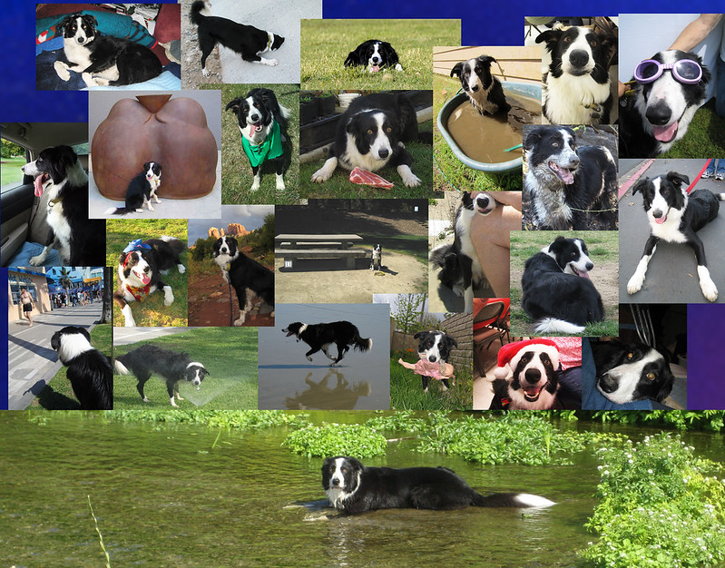 R0ndo Collage 2012