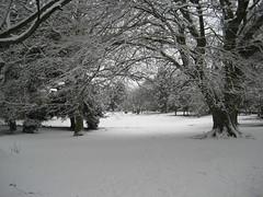 Frosty trees, Robert's Park
