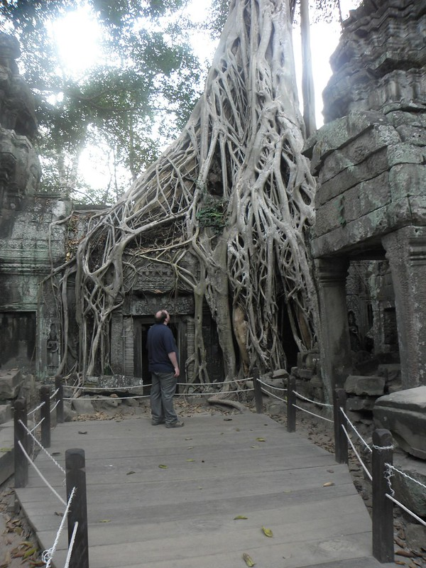 Siem Reap: Ta Prohm, among the Angkor Temples, Cambodia