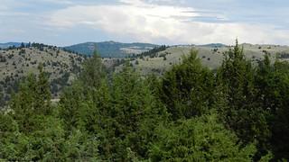 juniper mill
