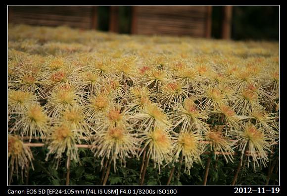 20121119_Flower10