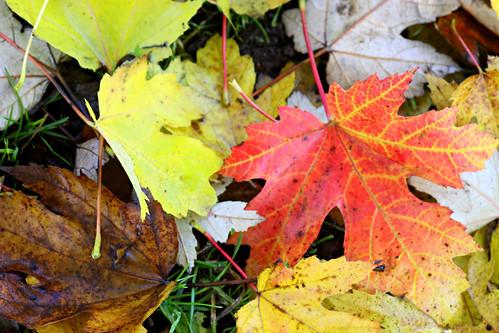 The Autumnal Fallen