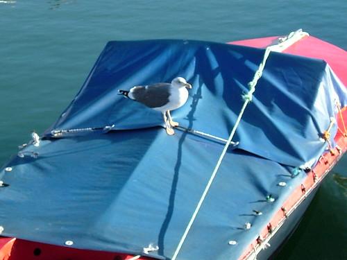 Flying navigator