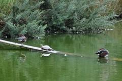 Vivez la cohabitation avec tous les pensionnaires à la villa du guip en Bretagne sud dans le Finistère decouvrez Concarneau, Pont Aven, Douarnenez