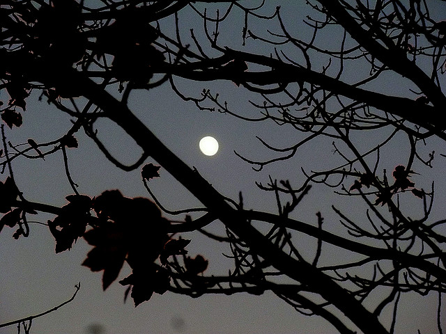 """""""Like the moon left on all night amongst the trees"""""""