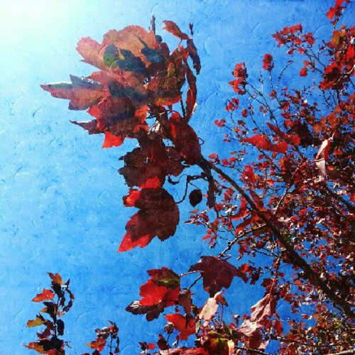 The Autumn Sun #red #fall #leaves #instamood #nature