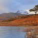 Slioch, A Scots pine, and a wee bit of Loch Maree. by Gordie Broon.