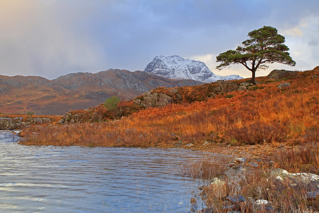 Slioch, A Scots pine, and a wee bit of Loch Maree.