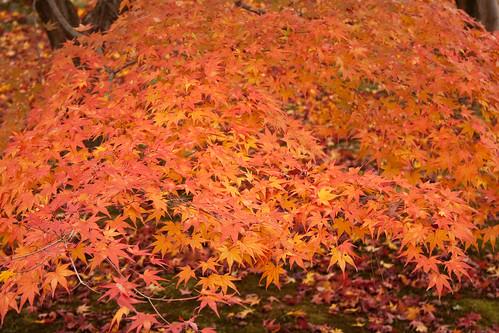 Enichisan Tōfuku-ji Changement de couleur des feuilles