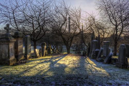 morning trees sun grass sunrise scotland scenery frost dew tombstones glasgownecropolis